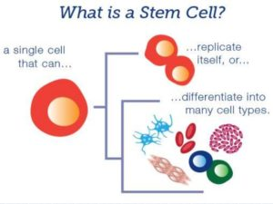 stem-cell-therapy-and-lungs-drtinku-joseph-4-638